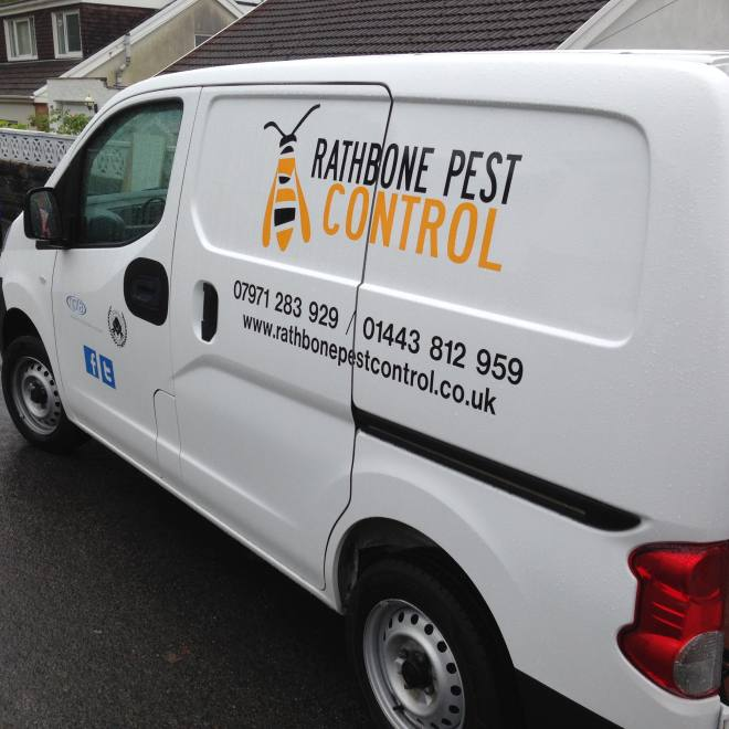 Pest Control Services in the Newport area