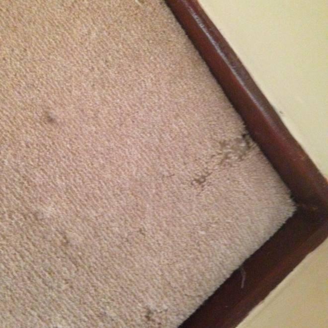 Pest Control Blackwood dealing with carpet beetle infestation