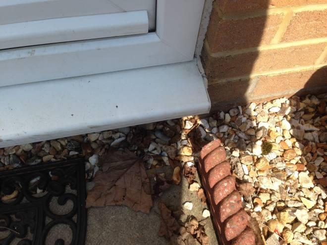 Pest Control Ants Ystrad Mynach and Llantwit Fardre