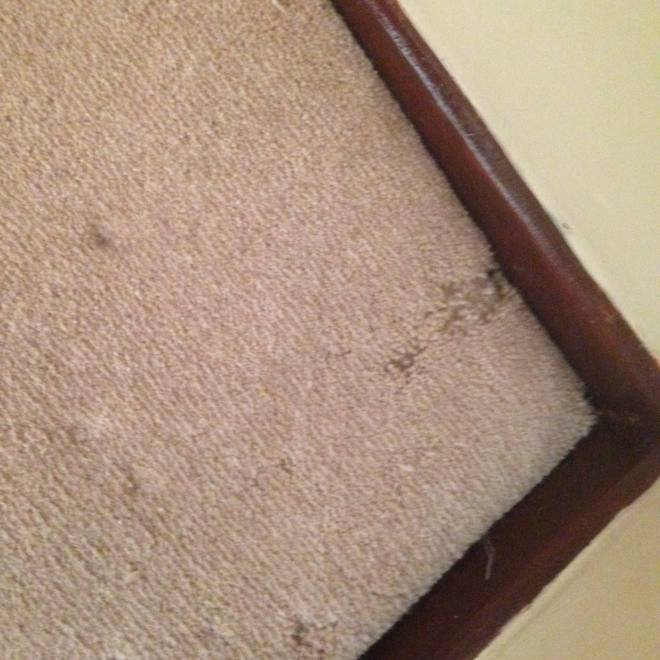 Pest Control Blackwood dealing with carpet beetle infestation